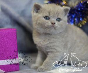 c_300_250_16777215_10_images_kittens_bri_pomet-p2_pepsi.jpg