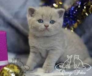 c_300_250_16777215_10_images_kittens_bri_pomet-p2_pepsi2.jpg