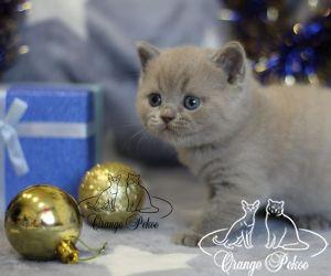 c_300_250_16777215_10_images_kittens_bri_pomet-p2_plushik2.jpg