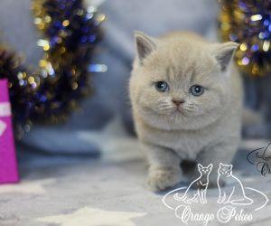 c_300_250_16777215_10_images_kittens_bri_pomet-p2_pupsi2.jpg