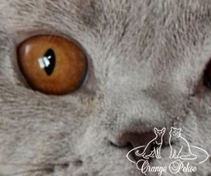 глаза апельсины